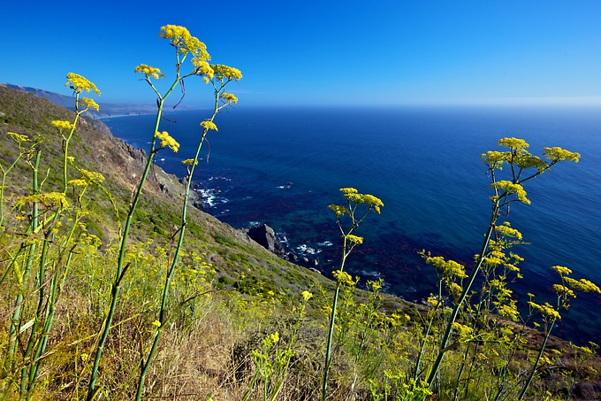 The next day we drove up into Big Sur. Daniel was especially grateful that while we experienced unusually warm weather for this region, it meant that there was unusually high visibility along the coast, allowing for better pictures.