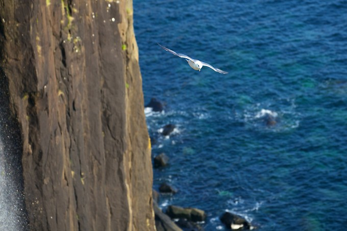 The seagulls were having fun playing on the upswells shooting up the wall of rock.